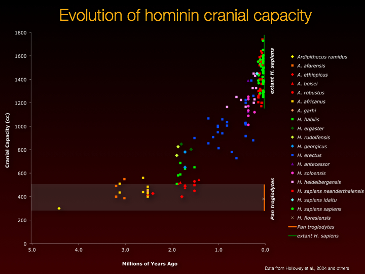 evolution of human cranial capacity